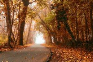 nature, Landscape, Fall, Forest, Road, Mist, Daylight, Leaves, Trees