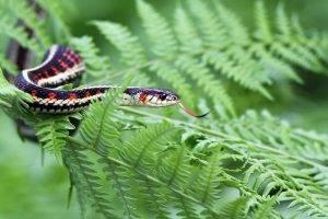 animals, Snake, Ferns