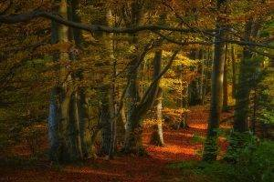 nature, Landscape, Forest, Fall, Path, Leaves, Sunlight, Trees