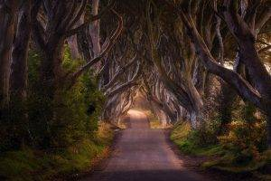 nature, Landscape, Road, Trees, Shrubs, Fairy Tale, Ireland, Grass, Morning, Daylight