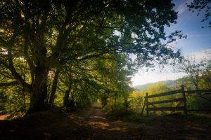 landscape, Nature, Dirt Road, Trees, Shadow, Path, Fence, Foliage, Mountain, Sunlight