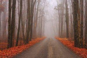 nature, Trees, Forest, Road, Fall, Landscape, Branch, Mist