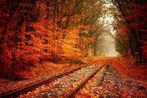 fall, Forest, Nature, Railway