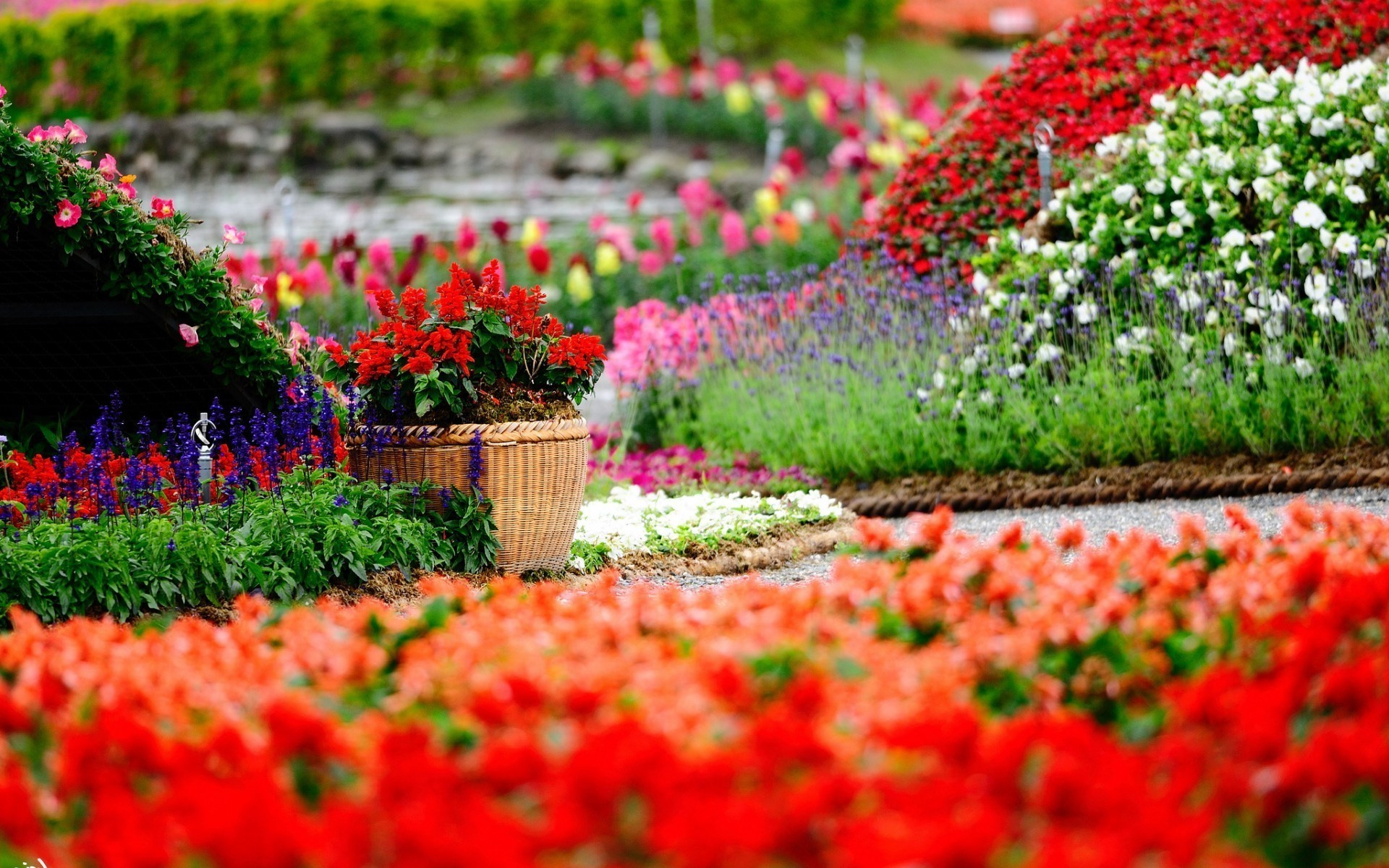Flower Garden Wallpaper Background flowers, garden, colorful, depth of field, baskets, red flowers