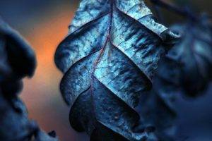 photography, Leaves, Nature, Filter, Depth Of Field, Macro