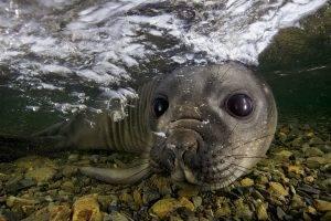 animals, Nature, Seals