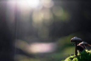 mushroom, Nature, Sunlight, Bokeh