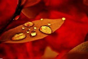 nature, Macro, Water Drops, Leaves, Fall