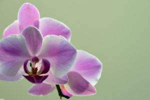 nature, Orchids, Flowers
