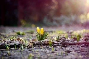 flowers, Nature, Plants, Bokeh, Depth Of Field