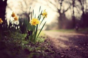 flowers, Dirt, Yellow Flowers, Depth Of Field