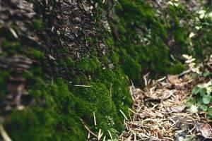 macro, Moss, Closeup, Nature