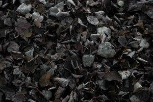 nature, Fall, Cold, Ground, Texture, Dark, Leaves