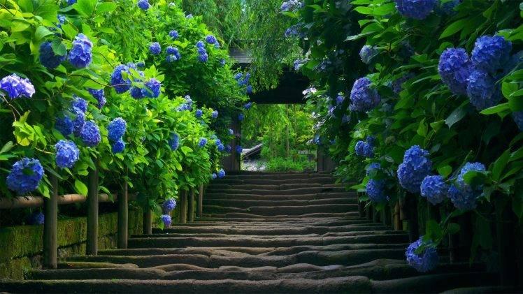 staircase, Hydrangea, Leaves, Flowers, Blue Flowers HD Wallpaper Desktop Background