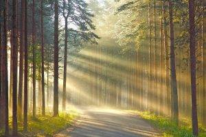 nature, Wood, Trees, Forest, Leaves, Road, Grass, Sun Rays, Branch, Shadow