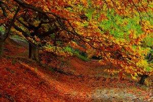 nature, Trees, Forest, Leaves, Fall, Plants, Path, Branch, Colorful