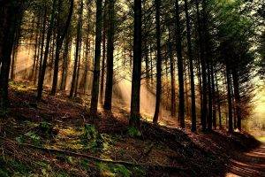 nature, Trees, Forest, Wood, Leaves, Branch, Sun Rays, Hill, Path, Moss, Roots, Dirt Road