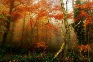 nature, Trees, Forest, Mist, Branch, Grass, Fall, Leaves