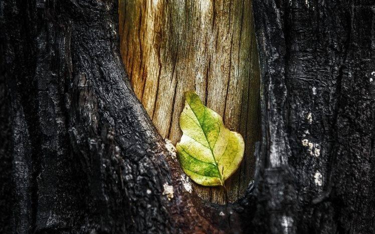 nature, Macro, Leaves, Trees, Wood HD Wallpaper Desktop Background