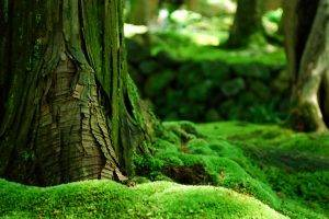 forest, Moss, Trees, Bokeh, Nature, Green, Depth Of Field