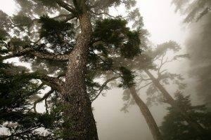 nature, Trees, Plants