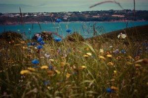 grass, Flowers