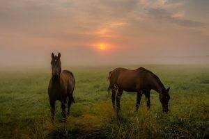 landscape, Animals, Mammals, Horse