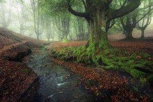 nature, Landscape, Forest, Creeks, Sunrise, Mist, Moss, Leaves, Fall, Hill, Sunlight, Trees, Spain