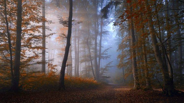 nature, Landscape, Forest, Fall, Mist, Path, Trees, Morning, Sunlight, Atmosphere HD Wallpaper Desktop Background