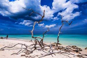 landscape, Nature, Beach, Sand, Tropical, Sea, Sky, Turquoise, Caribbean, Water, Clouds, Dead Trees, Cuba