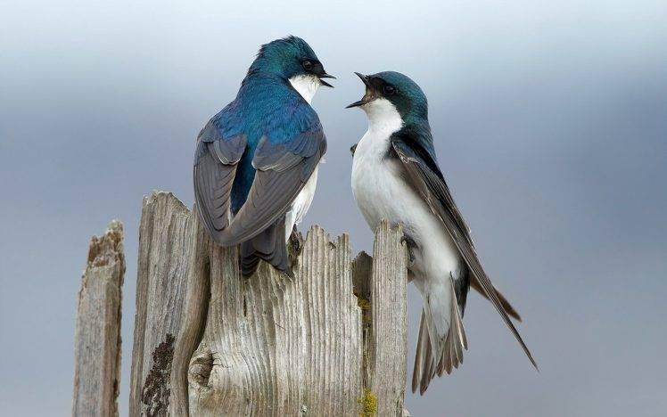 animals, Birds HD Wallpaper Desktop Background