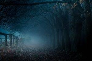 path, Mist, Trees, Fall, Fence, Sunrise, Blue, Nature, Landscape, Leaves, Atmosphere