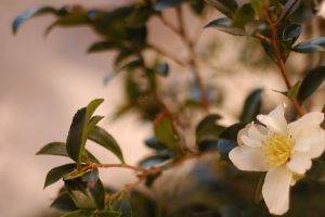 photography, Nature, Plants, Flowers, Depth Of Field