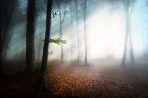 sunlight, Mist, Nature, Forest