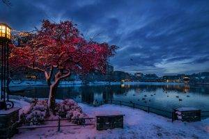 nature, Trees, City, Cityscape, Norway, Evening, Winter, Snow, Lights, Water, Lake, Clouds, Branch, House, Reflection, Birds, Building, Lamp