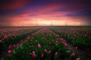 field, Flowers, Landscape