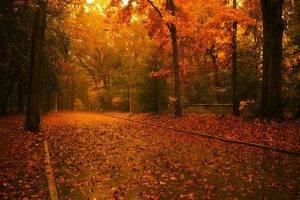 road, Leaves, Trees