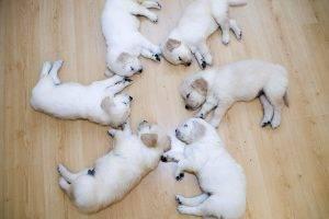 dog, Wood, Circle, Sleeping, Puppies