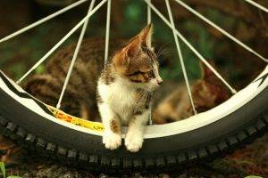 cat bicycle bicycle tires