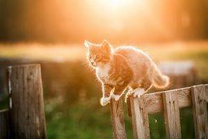 kittens cat fence