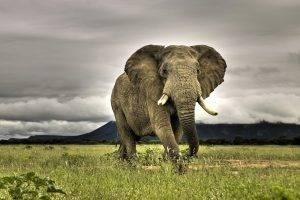africa nature landscape elephant