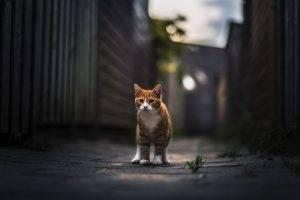 cat animals nature
