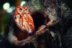 owl birds animals trees