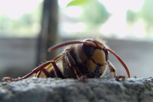 macro insect wasps