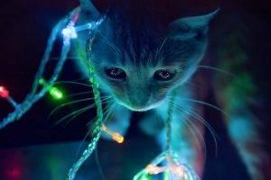 cat neon lights macro