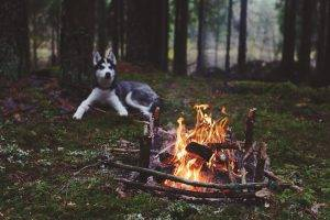 dog forest fireplace