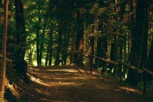 nature, Forest, Trees, Path