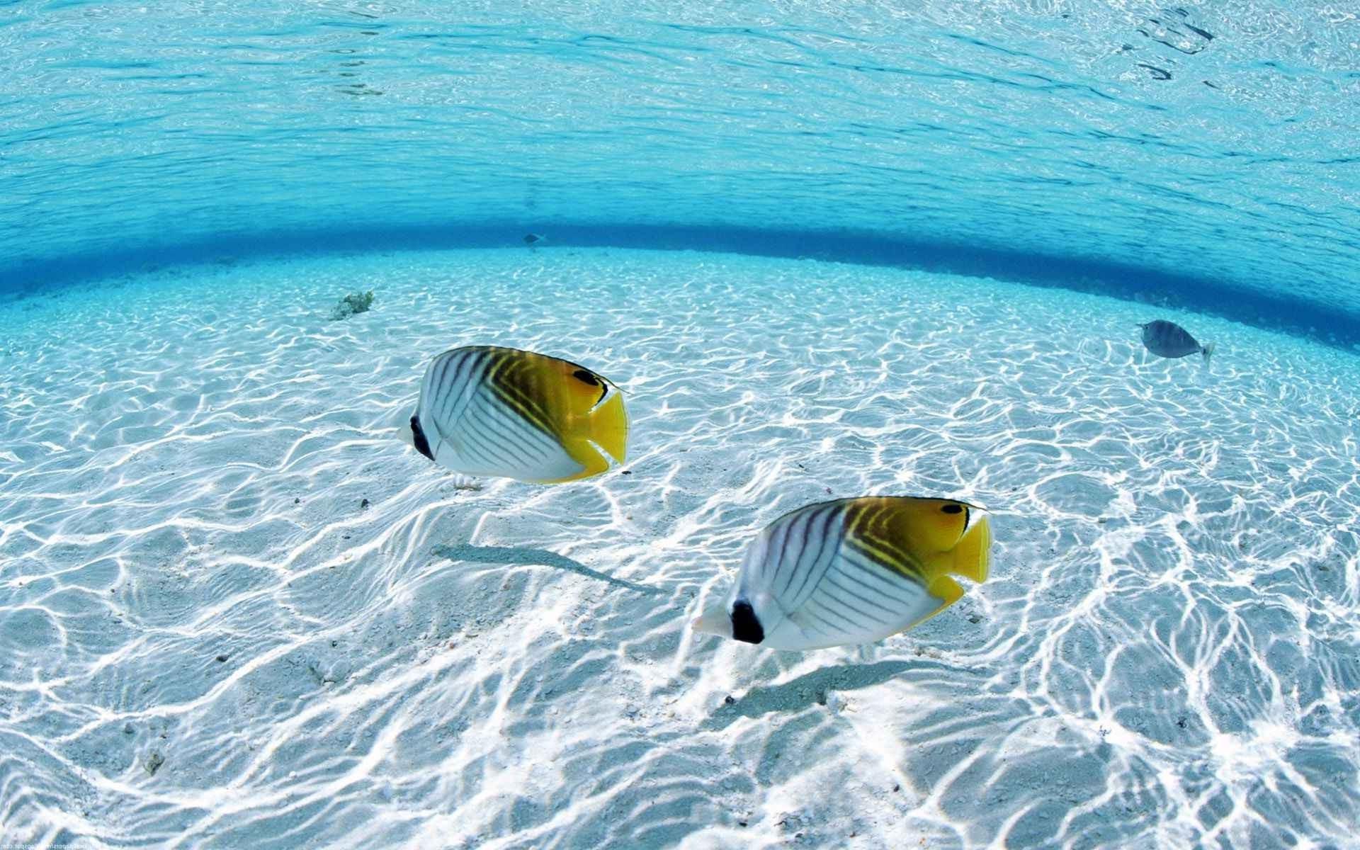 Hd wallpaper underwater - Fish Sea Underwater Wallpaper Hd