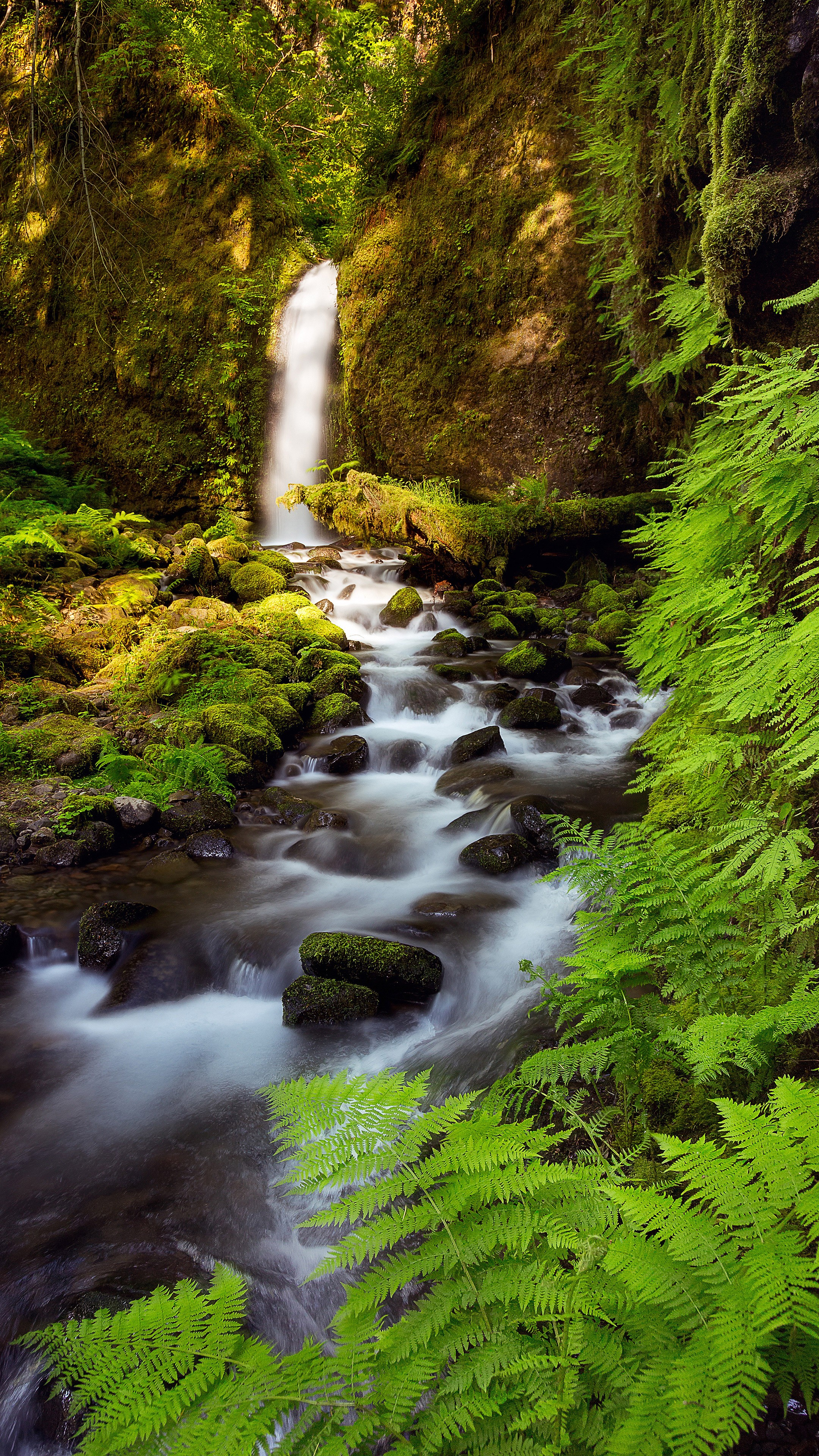 Landscape vertical creeks wallpapers hd desktop and - Nature wallpaper vertical ...