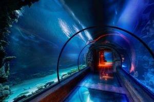 aquarium, Tunnel, Underwater, Sea, HDR